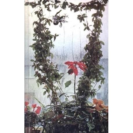 Pflanzen und Blumen im Haus. Von Ludwig Koch-Isenburg (1966).