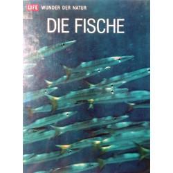 Die Fische. Von F.D. Ommanney (1964).